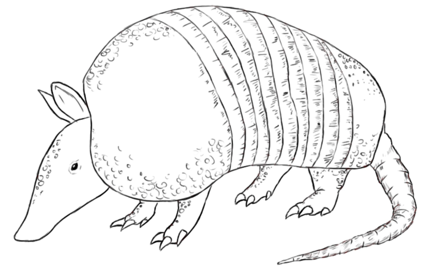 free coloring pages of armadillo para colorear