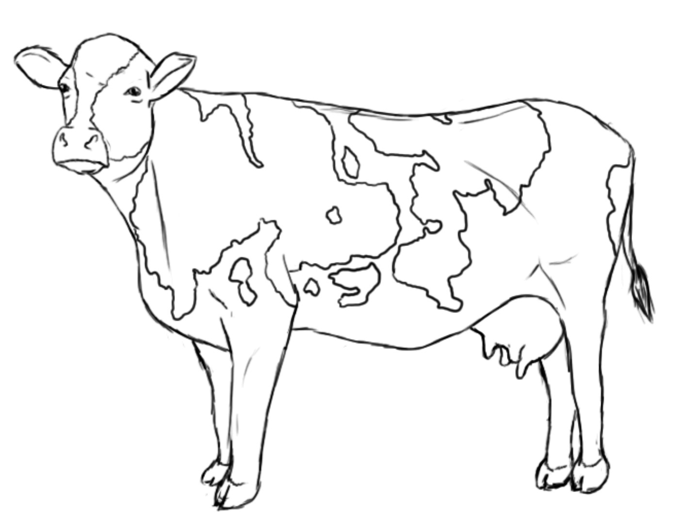 cow coloring pages print - photo#34